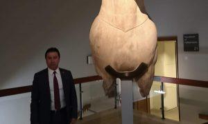 ahmet-aras-british-museum1